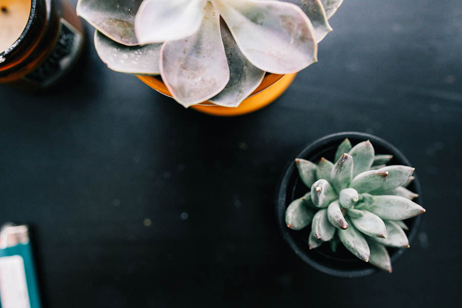 Free Photography Resources - Death to the Stock Photo